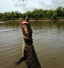 Morning Jumping Crocodile 1/2 day