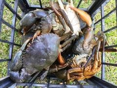 Mud Crab Tour