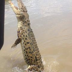 Afternoon Jumping Crocodile Cruise