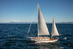 Sail Barbary to the Maori Rock Carvings - day time Cruise
