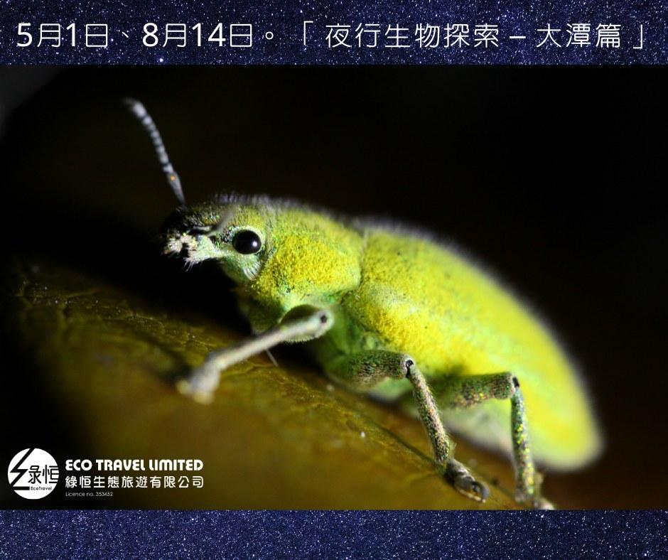 夜行生物探索 – 大潭篇  (8月14日)