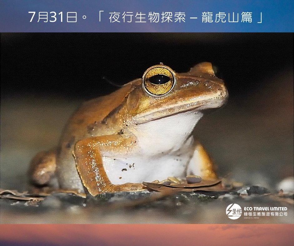 夜行生物探索 – 龍虎山篇  (7月31日)