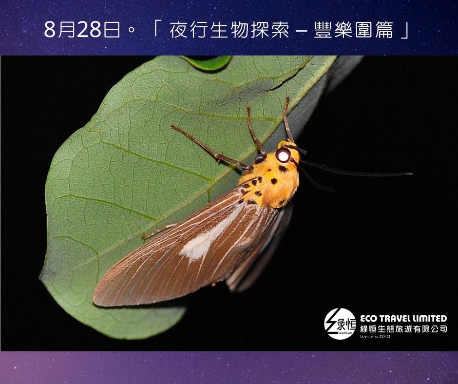 夜行生物探索 – 豐樂圍篇  (8月28日)