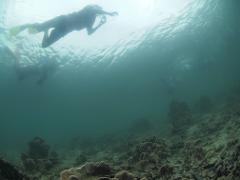 西貢海洋漫遊