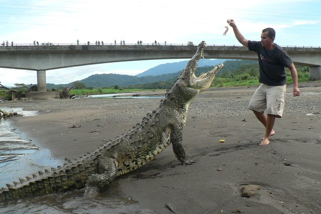 Adventure connection: Manuel Antonio to Monteverde or Arenal with Crocodile Watching in Rio Tarcoles