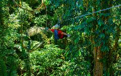 Selva Bananito Experience Canopy observation Platform