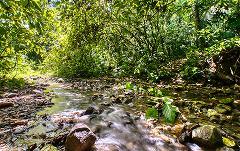 Selva Bananito Experience Natural History Hike