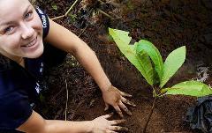 Selva Bananito Experience Plant a Tree