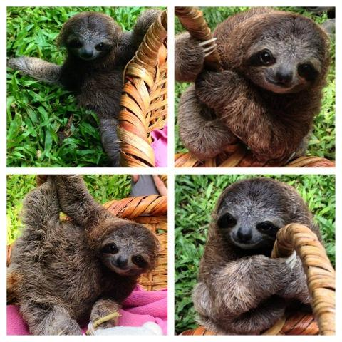 Wednesday´s & Saturday's Tour of the day! Jaguar Animal Rescue Center and Punta Uva Beach & Jungle Hike