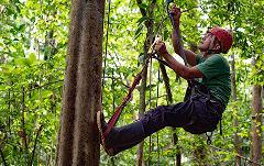 Selva Bananito Experience Introductory Tree Climbing