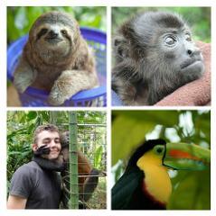 Jaguar Animal Rescue Center and Punta Uva Beach & Jungle Hike