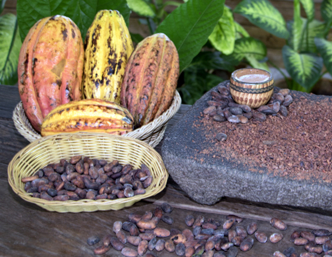 Thursday´s Tour of the day! Chocolate Forest Experience & Coconut Beach Trail Tour Congo Bongo