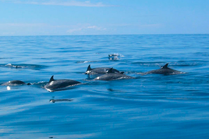 Adventure connection: Monteverde to Samara Dolphin Viewing and Snorkeling