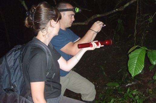 RARG  Reserve Caribbean Rain Forest - Night Tour ( Villas Piña )