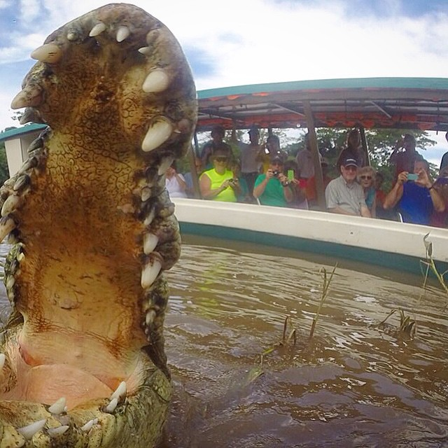 Adventure Connections: Crocodile Watching Boat Tour + Transportation from La Fortuna & Arenal Volcano