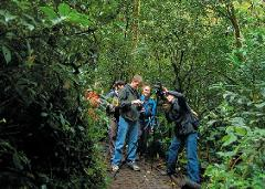 Bird Watching Monteverde Cloud Forest Reserve - Private
