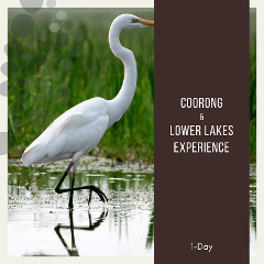 Coorong & Lower Lakes Experience