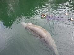 Semi-Private Premium Houseboat Manatee Tour - The Outstanding Odyssey (4hr Heated) - Crystal River