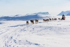 Dogsledding / Hundspannstur Björkliden (3633-620)