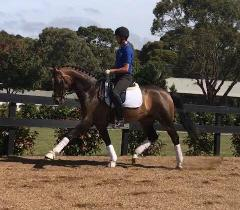 RHD Horse Training- One Week
