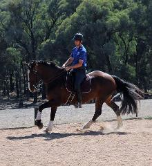 RHD Horse Training Session