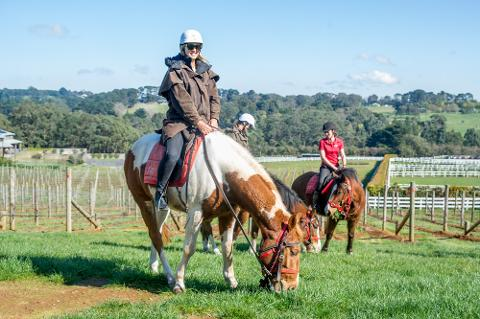 3 Hour Horseback Winery Tour - WEEKDAY- 25% OFF RRP