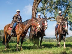 2 Hour Horseback Winery  Tour