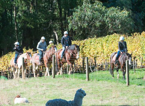 2 Hour Horseback Winery  Tour - WEEKDAY - Lunch options will be presented upon booking.