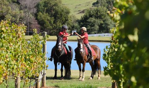 2 Hour Horseback Winery  Tour - WEEKDAY - 25% OFF RRP