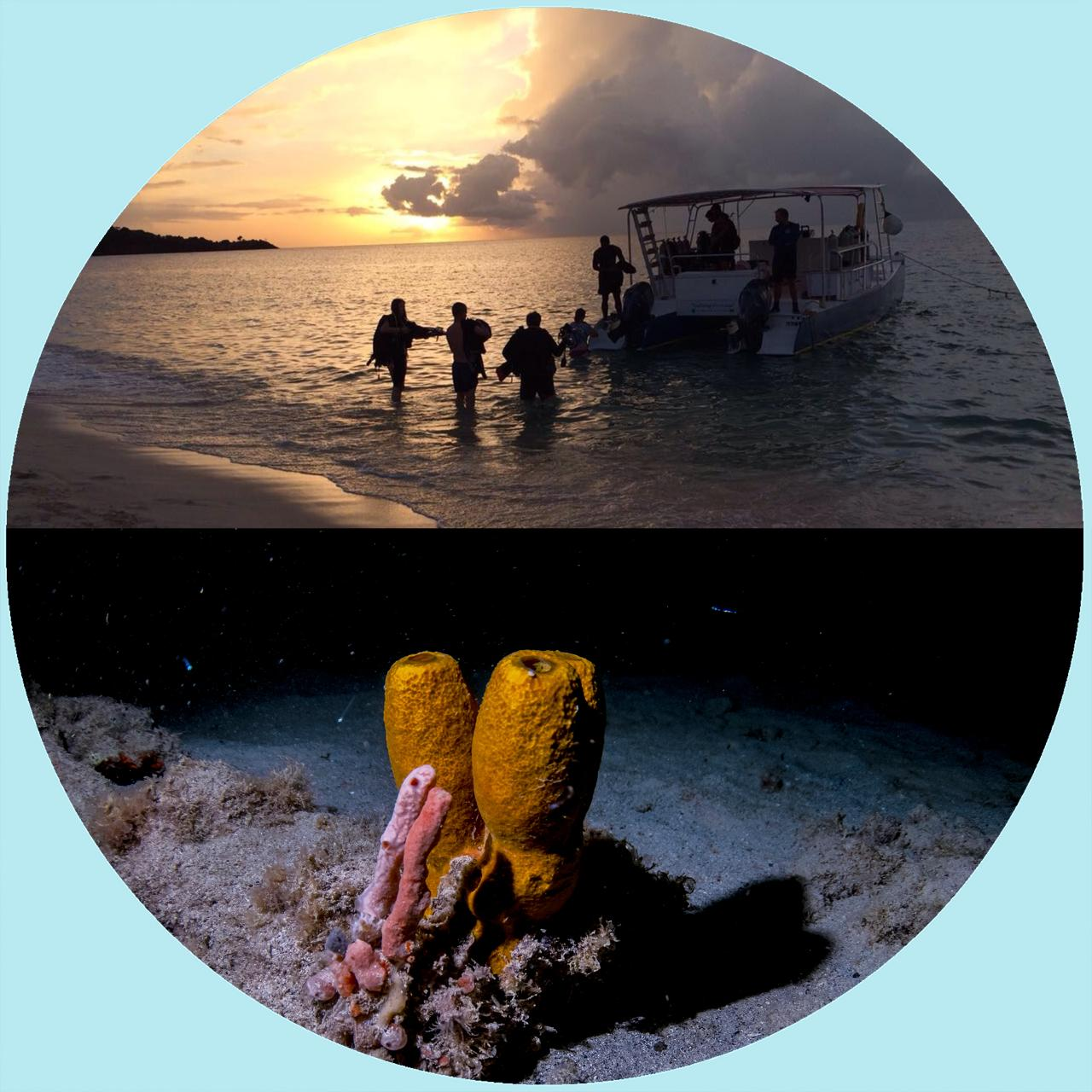 Night Dive (Shore Dive)