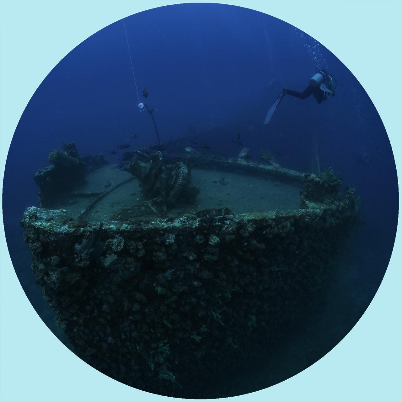 11+ Dive Package (per dive)