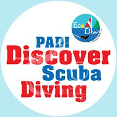 PADI Discover Scuba Diving (Resort Dive) - DIVE Today!