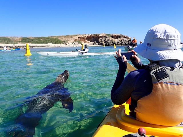 Penguin and Seal Island Sea Kayak 6 hour Tour