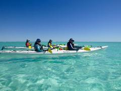 6 Day Ultimate Safari and Whale Shark Adventure Package