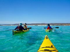 4 Day Reef and Beach & Whale Shark Adventure Package