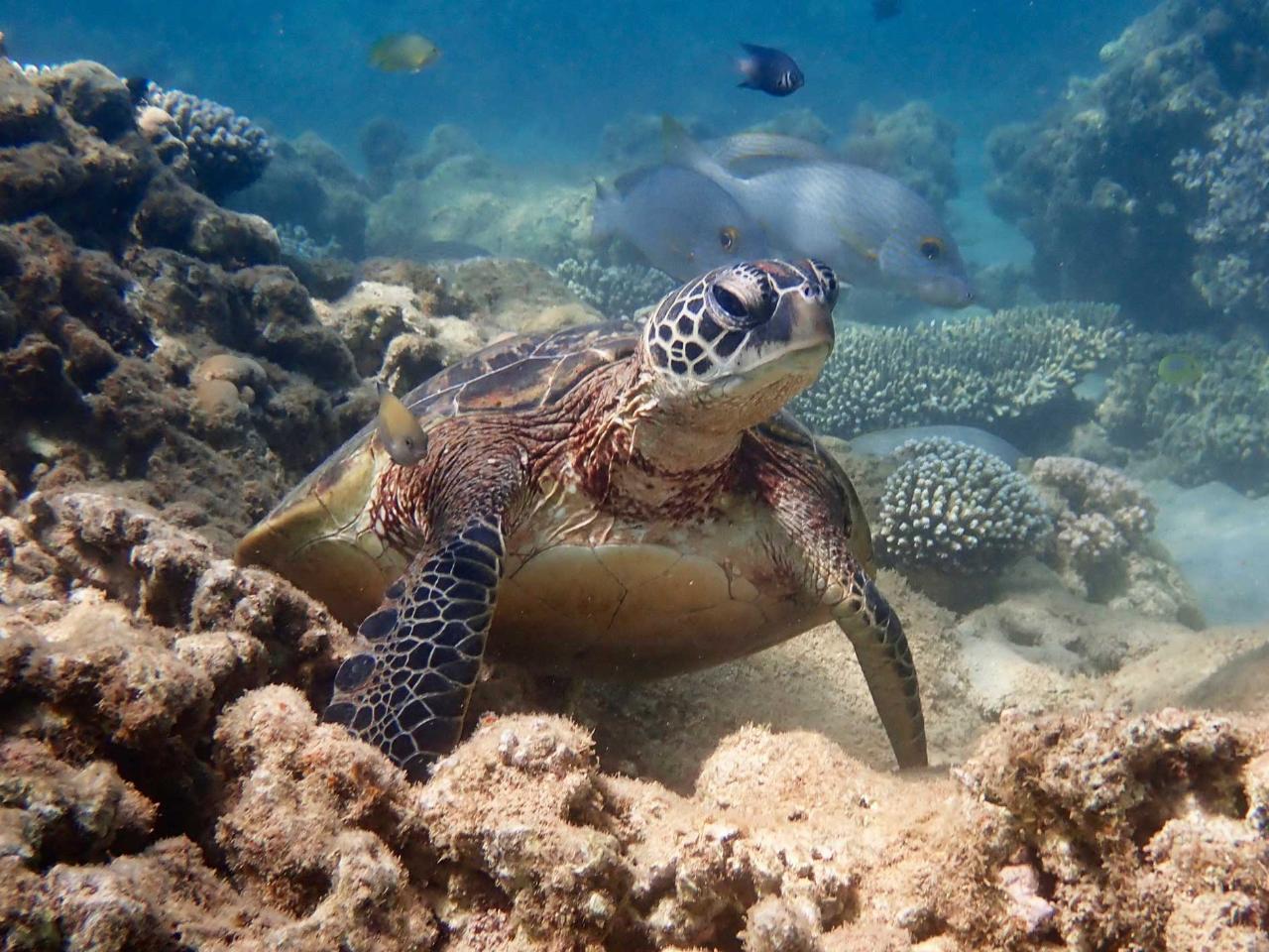 Turtle Tour - Half Day Sea Kayak & Snorkel Tour