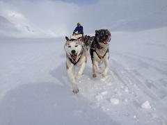 Winter Wonderland Dogsledding Abisko