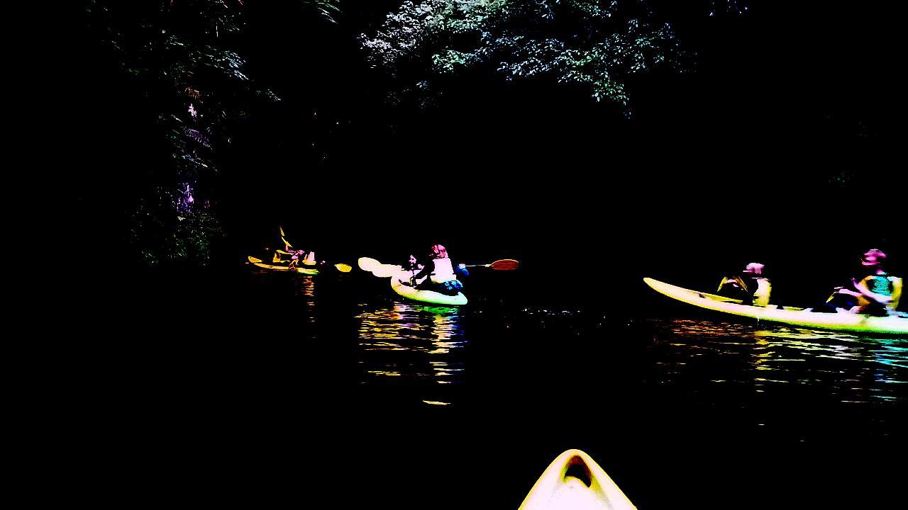 Kayak Glow Worm Tour