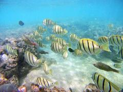 10:00am Hanauma Bay Snorkeling (10:00am-10:30am Departure)