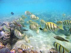 8:30am Hanauma Bay Snorkeling (8:30am to 9:00am Departure)