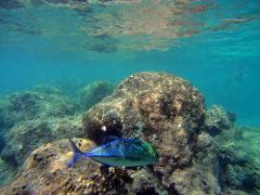 7:00am Hanauma Bay Snorkeling (Deluxe Plan)