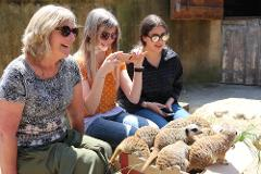 Meerkat Close Encounter Gift Card