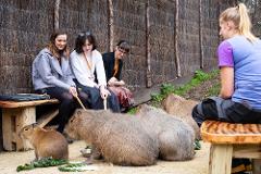 Capybara Close Encounter