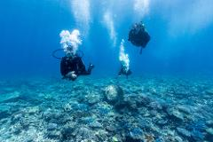 Two Day Double Dive Adventure Package - 4 Dives at 2 Great Sites