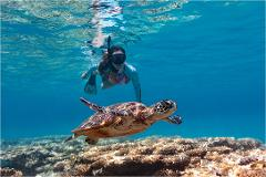 2 Day Reef and Whale package: Lady Musgrave Full Day Island Tour & Bundaberg 1/2 Day Whale Watching