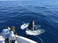 Whale Watching Tours Bundaberg