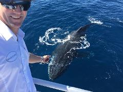 Australia Whale Experience: 1/2 Day Whale Watching Tour - Departs Bundaberg