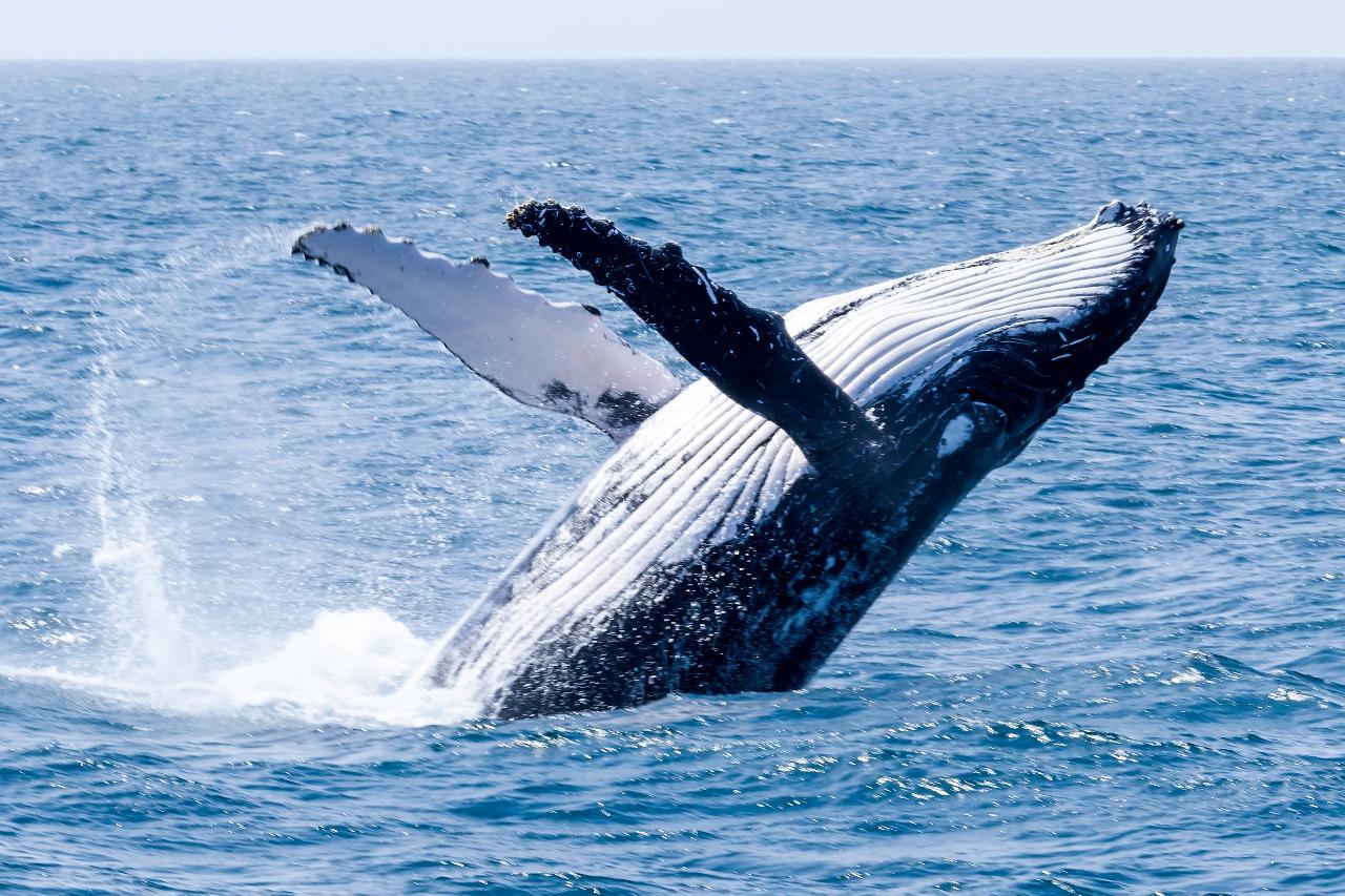 Whale Watching Season Pass 2021