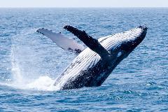 Australia Whale Experience                   Season Pass 2020