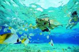 SNORKEL WITH THE FISH